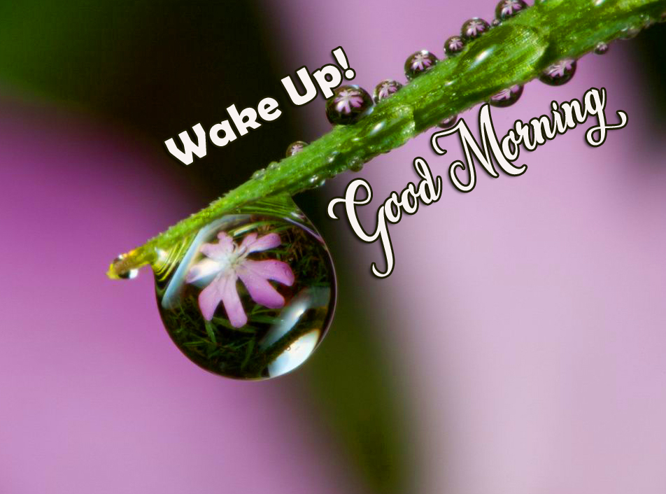 Wake Up Good Morning Wish with Flower in Dew Drop