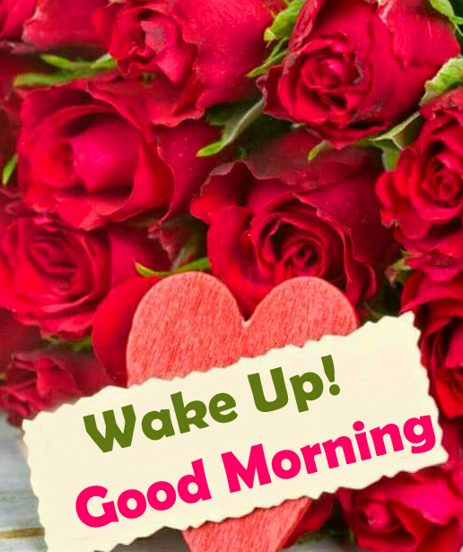 Wake Up Good Morning with Red Roses Pic