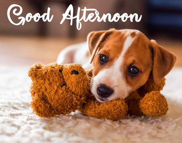 Adorable Puppy Good Afternoon Sunday Pic