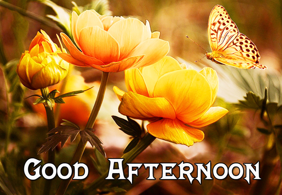Beautiful Flowers and Butterfly and Good Afternoon Wish