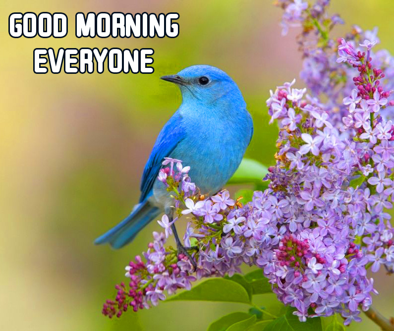 Bird Good Morning Everyone Flowers Picture