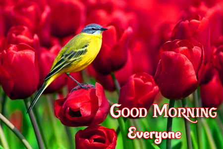 Bird and Red Tulips Good Morning Everyone Photo