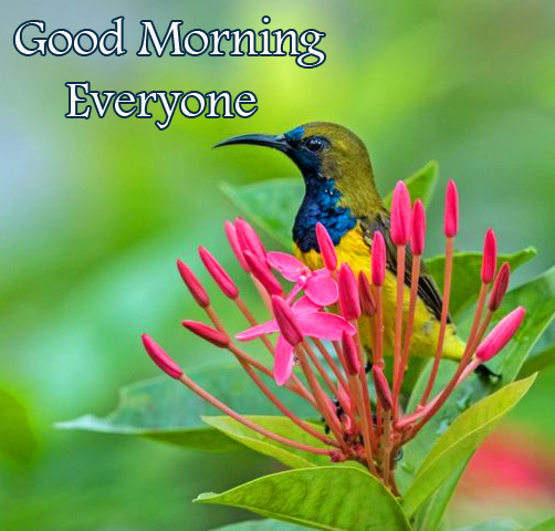 Bird in Flower with Good Morning Everyone Wish