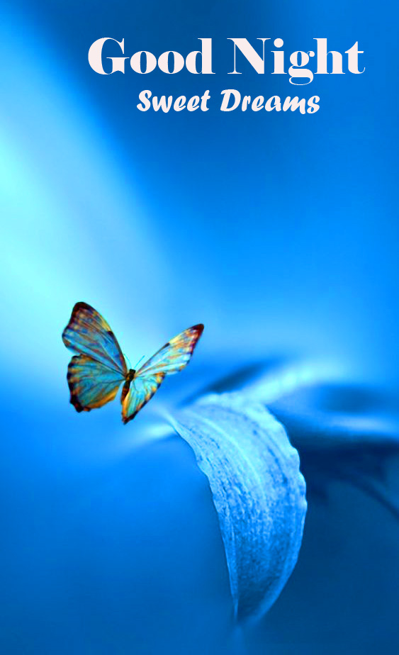 Butterfly Good Night Sweet Dreams Picture