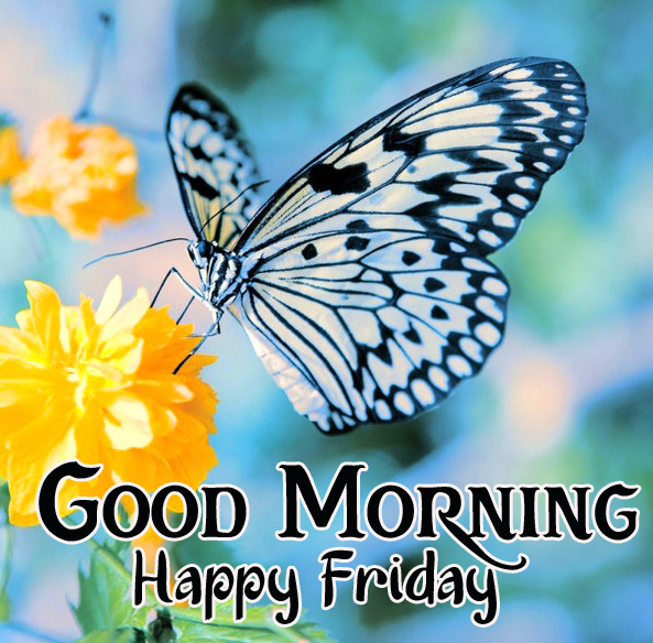 Butterfly and Flower Good Morning Happy Friday Image
