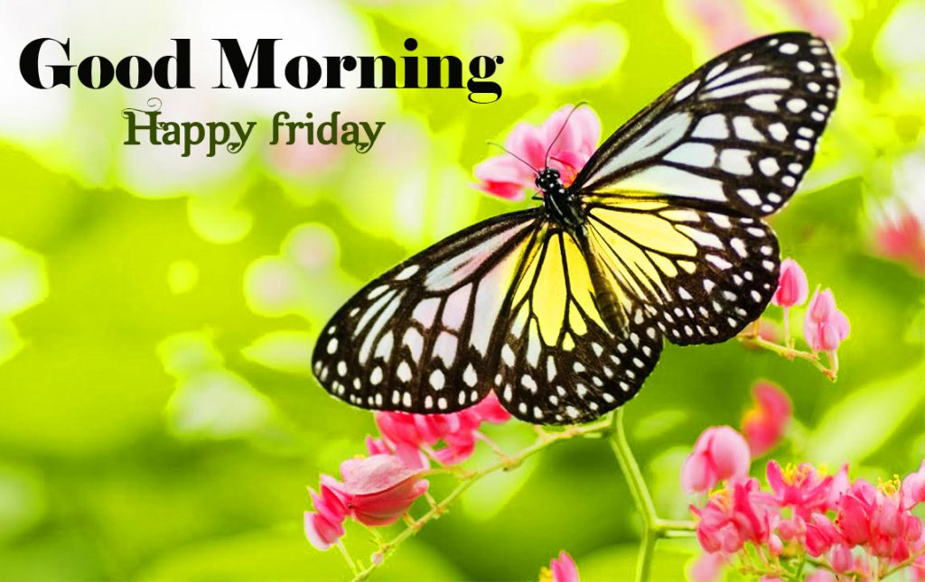 56+ Good Morning Friday Images