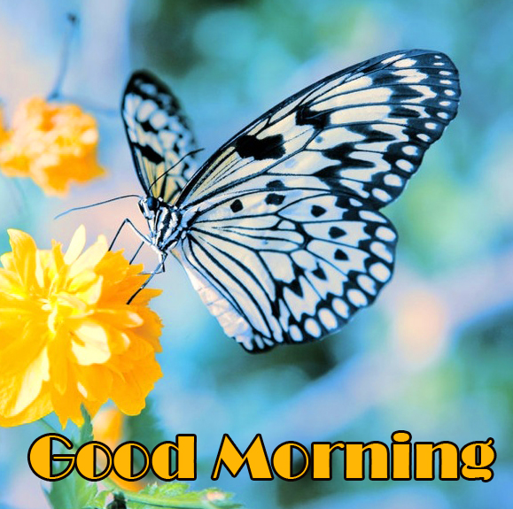Butterfly on Flower with Good Morning Wih
