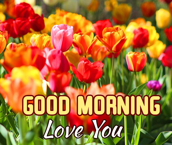 Colourful Flowers with Good Morning Love You Message