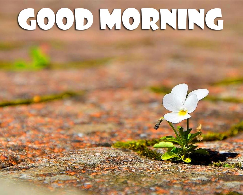 Cute Small Flower with Good Morning Wish