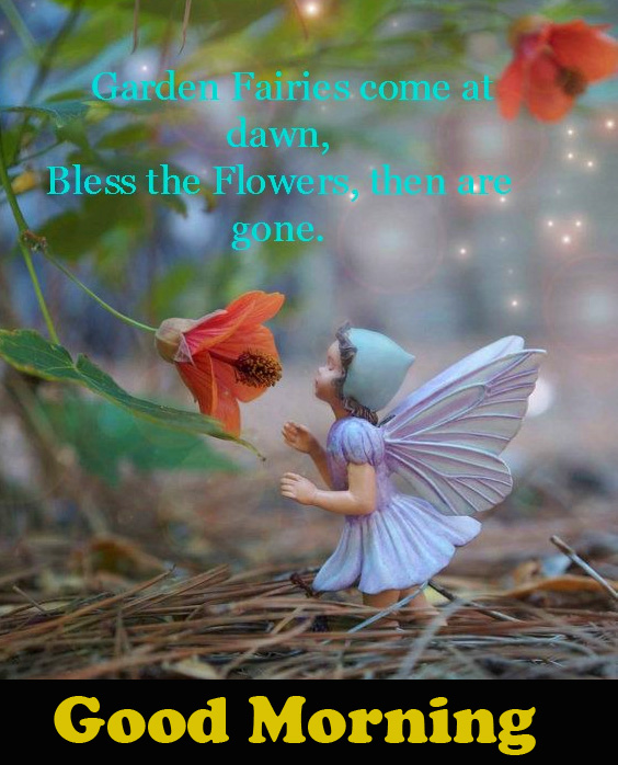 Fairy Baby Quotes Good Morning Image