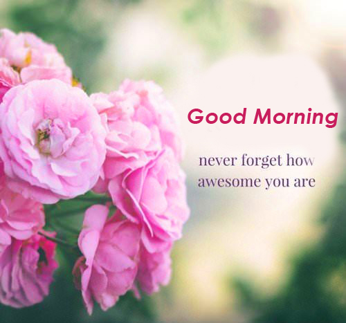 Flowers Good Morning Message Image