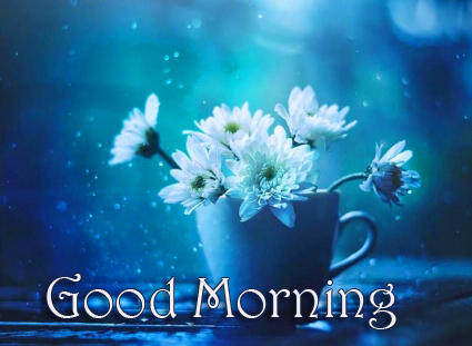 Flowers Good Morning Pic HD