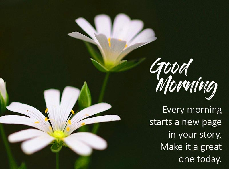 Flowers Quotes with Good Morning Message