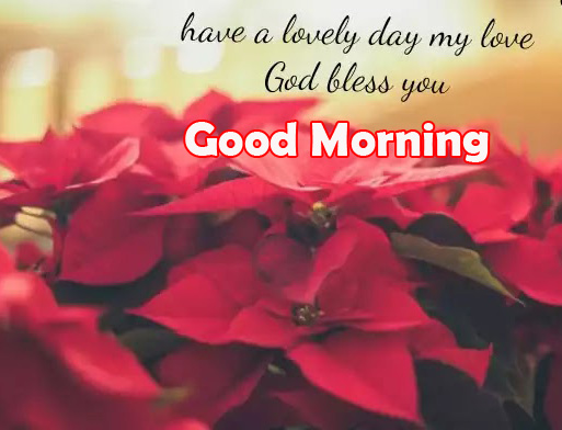 Flowers with Good Morning God Bless Image