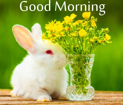 Fluffy Bunny with Flowers Vase and Good Morning Wish