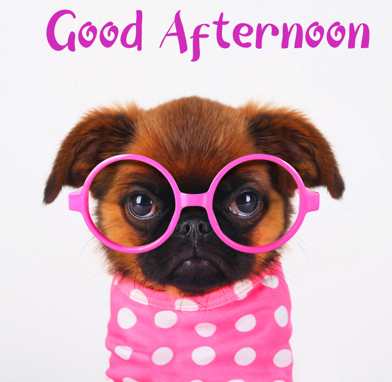 Funny Puppy Good Afternoon Sunday Wallpaper