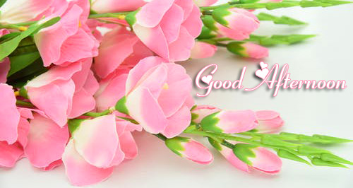 Good Afternoon Pink Flowers Picture