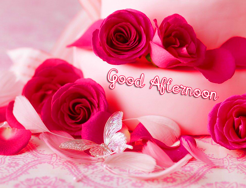 Good Afternoon Red Rose Picture HD