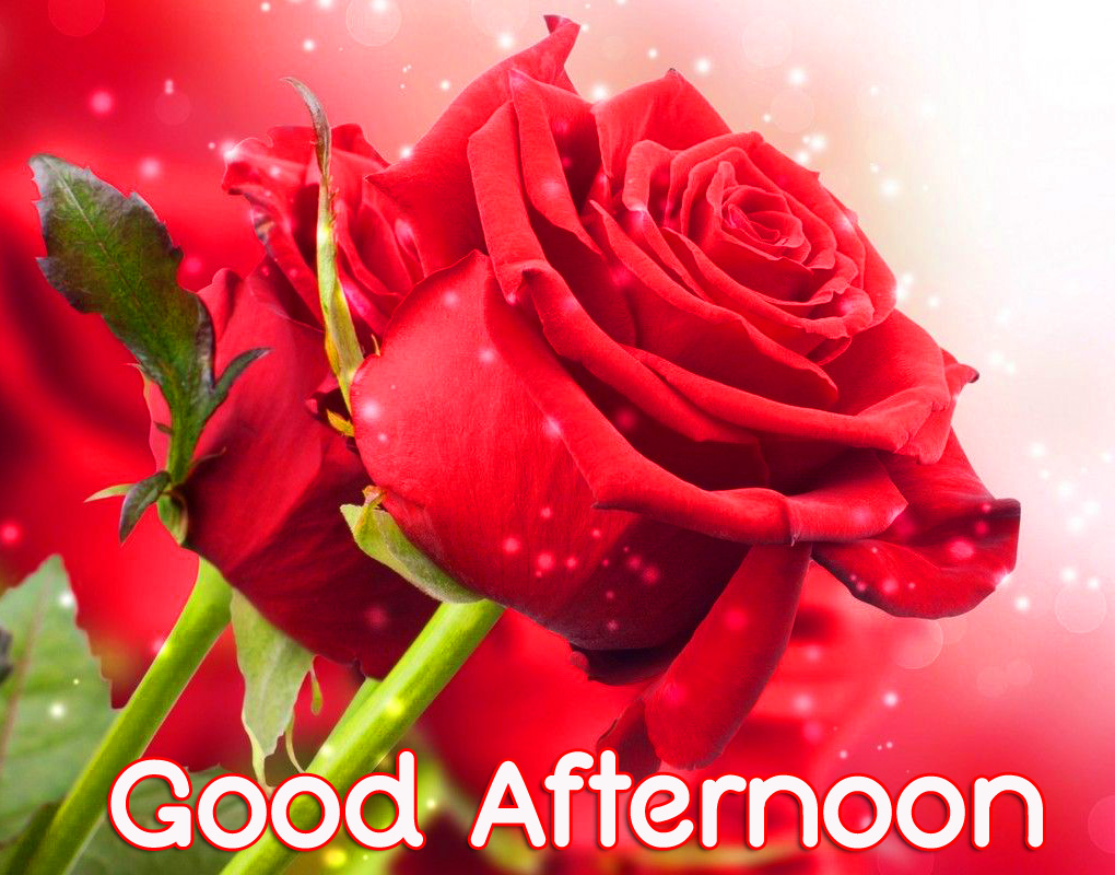 Good Afternoon Red Roses Picture