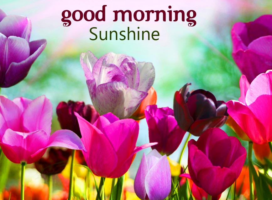 Good Morning Colourful Flowers Picture