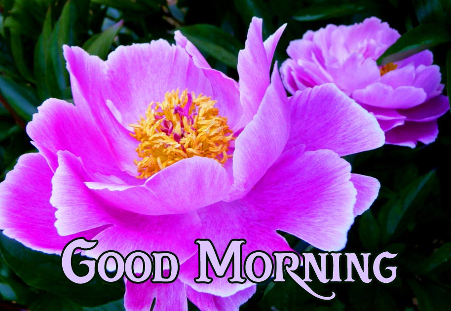 Good Morning Flowers Picture HD