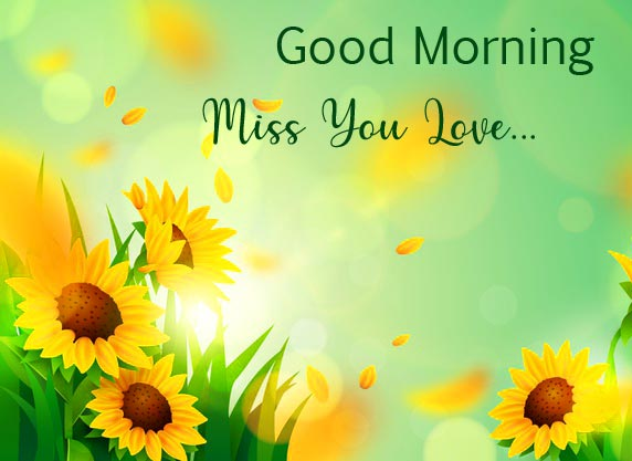 Good Morning Miss You Love Flowers Scenery