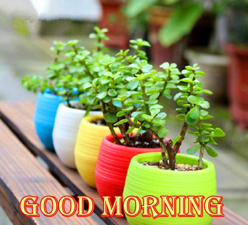 Good Morning with Colourful Flower Pots