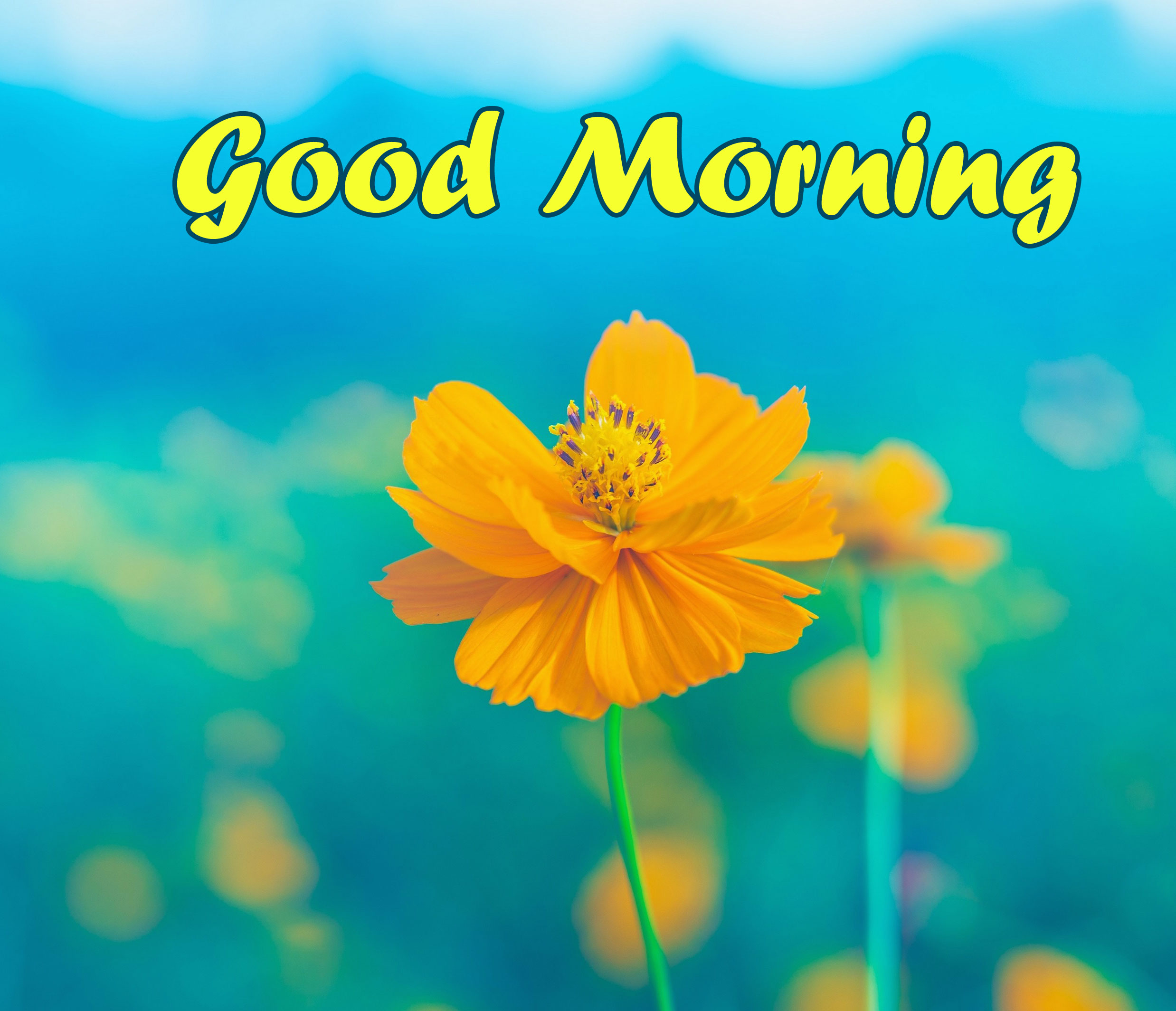 Good Morning with Cute Flower Pic