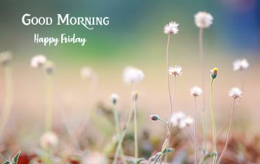 Grass Flowers with Good Morning Happy Friday Wish