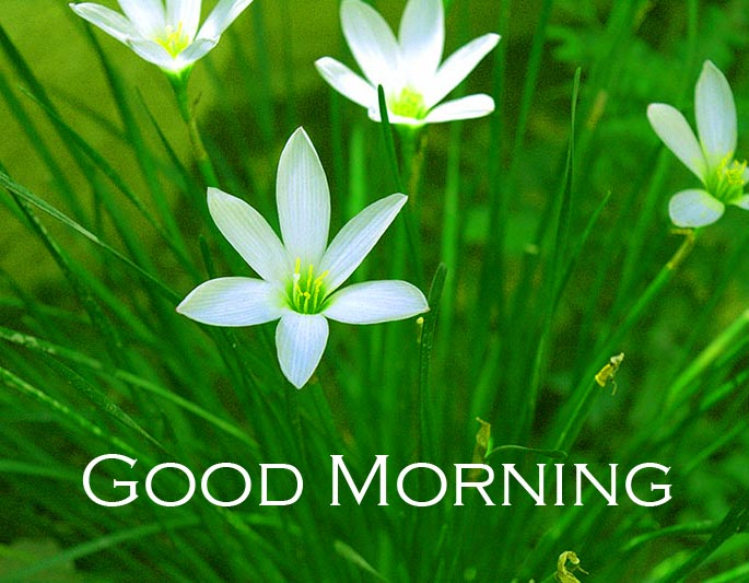 Grasss Flowers with Good Morning Wish