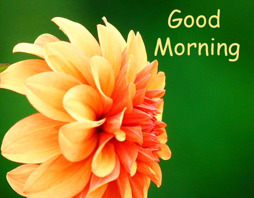 HD Flower with Good Morning Wish