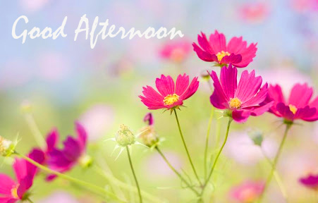 HD Flowers Good Afternoon Image