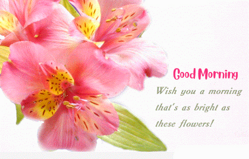 HD Flowers Good Morning Message Pic