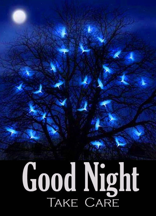 HD Shining Birds as Leaves Trees with Good Night Take Care Message
