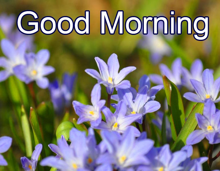 HD Small Cute Flowers Good Morning Image