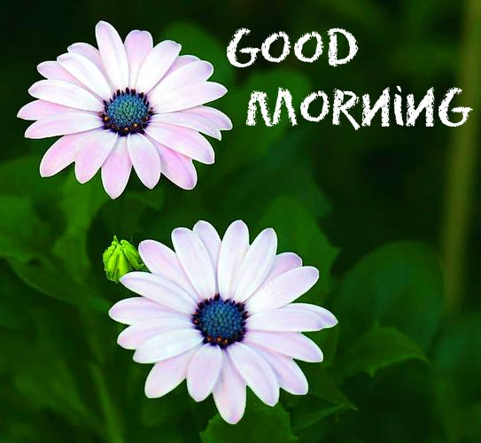 Lovely Good Morning Flowers Picture