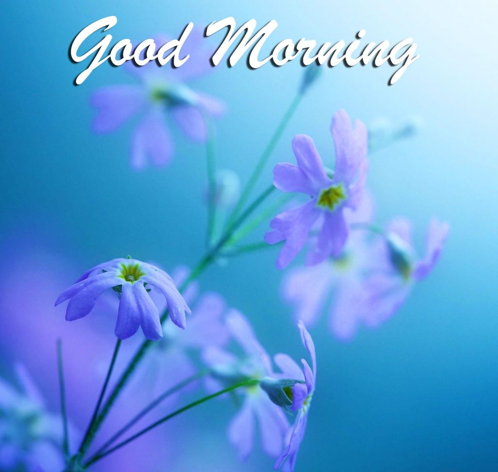 60+ Latest Good Morning Pictures HD 1080p for  Pinterest