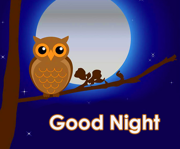 Owl Good Night Picture