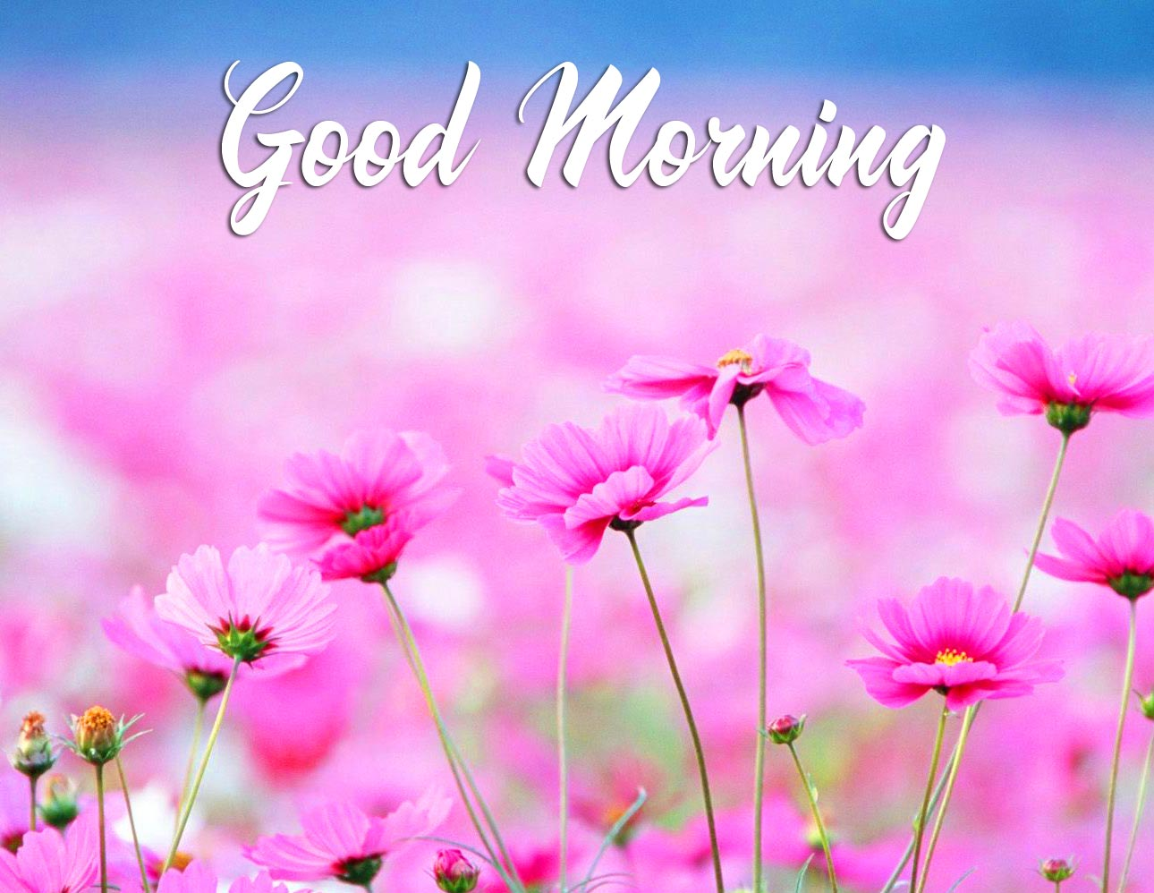 Pink Cute Flowers Good Morning Pic