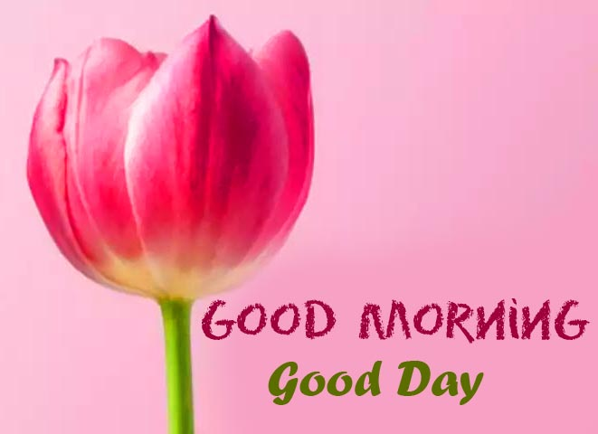 Pink Flower with Good Morning Good Day Wish