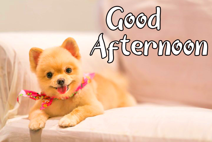 Puppy Funny Good Afternoon Sunday Pic