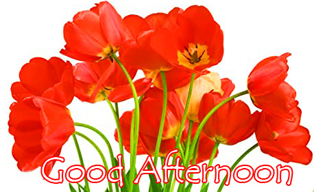 Red Blooming Flowers Good Afternoon Image