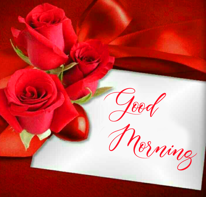 Red Roses Good Morning Picture HD
