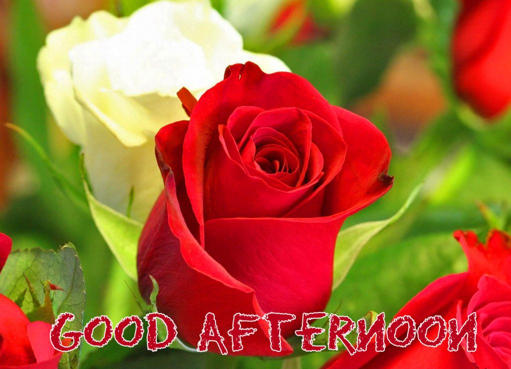 53+ Good Afternoon Flowers Images (Day of week)