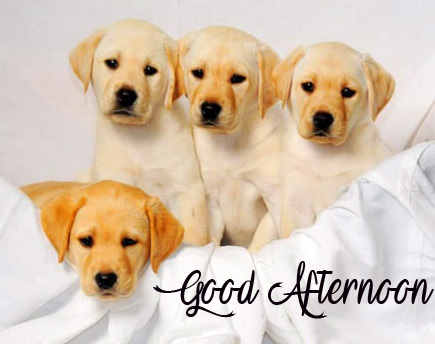 Relaxing Dogs Good Afternoon Sunday Image