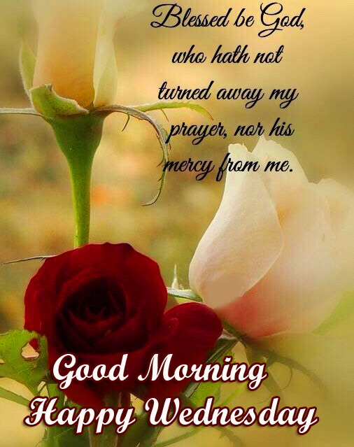 Rose Flowers Blessing Good Morning Happy Wednesday Image