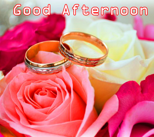 Rose Flowers with Rings and Good Afternoon Wish