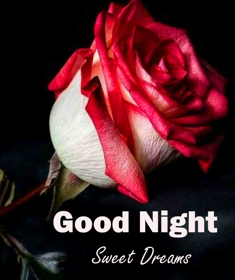 Rose Good Night Sweet Dreams Picture HD