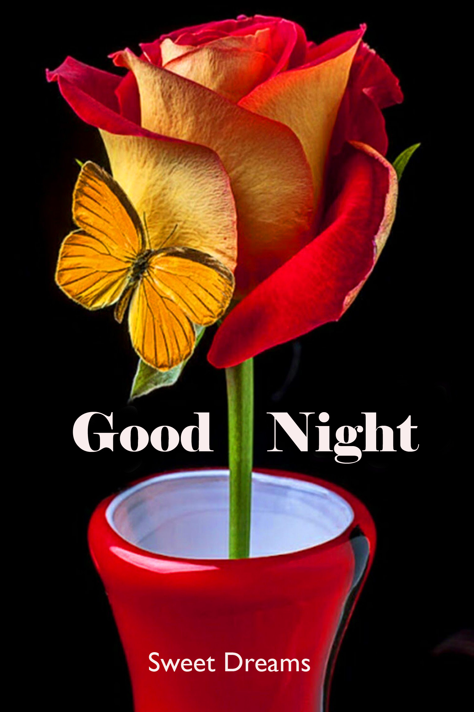 Rose in Pot with Good Night Sweet Dreams Wish