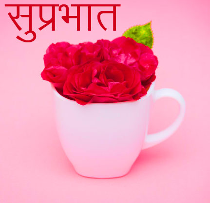Roses Suprabhat Cup Image